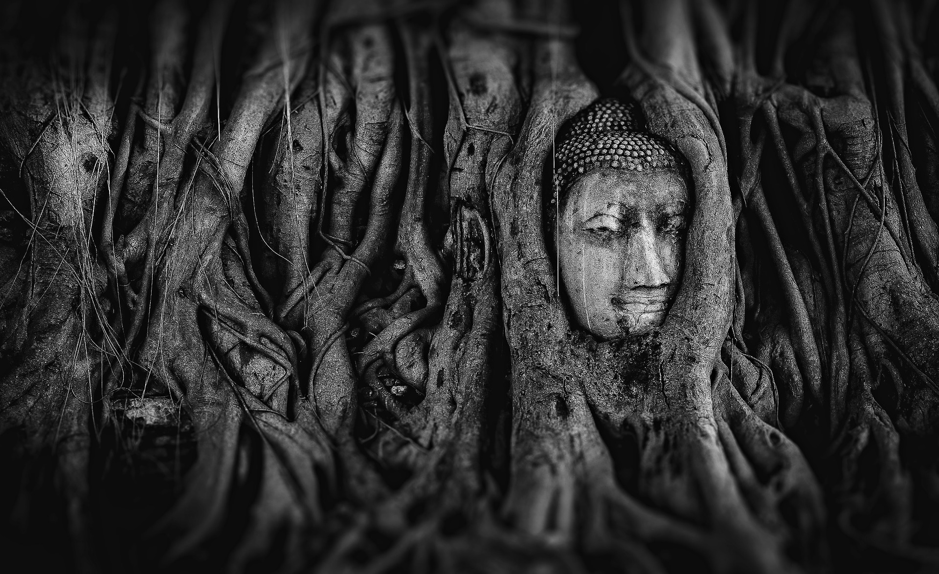 buddah face in a tree black and white photo